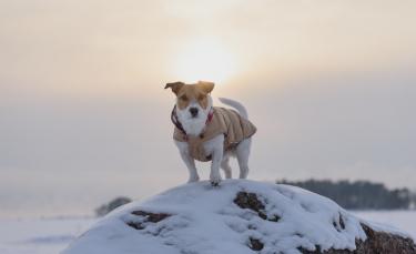 """Illustration : """"Le manteau pour chien"""""""