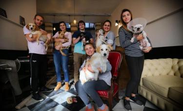 "Illustration : ""Lille va avoir son premier Dog Café : le WAF !"""
