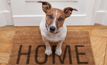 """Illustration : """"Comment montrer à son chien que la maison n'est pas son territoire ?"""""""