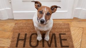 Illustration : Comment montrer à son chien que la maison n'est pas son territoire ?