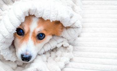 """Illustration : """"Les réactions du chien face au froid"""""""