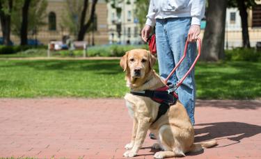 """Illustration : """"Le chien guide d'aveugle, comment ça marche ?"""""""