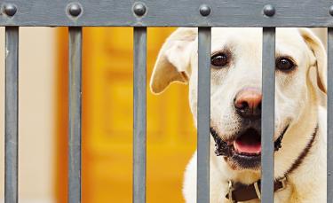 """Illustration : """"La clôture électrique anti-fugue pour chien"""""""