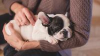 Illustration : Pourquoi prendre une assurance pour son chien ?