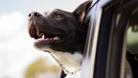 Illustration : Quel est le coût d'une assurance santé pour chien ?