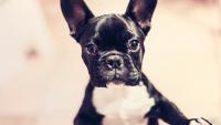 Illustration : Les pièges à éviter pour assurer son chien