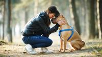 Illustration : Les modalités de souscription à une assurance santé pour chien
