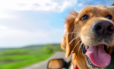 """Illustration : """"Bien choisir son assurance pour chien"""""""