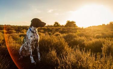 """Illustration : """"7 races de chiens qui demandent le plus d'attention"""""""