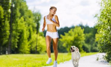 "Illustration : ""L'assurance sport canin"""