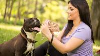 Illustration : La responsabilité civile chien obligatoire pour les chiens de catégorie