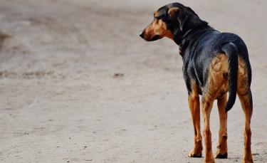 """Illustration : """"8 signes qui montrent que votre chien se sent seul"""""""