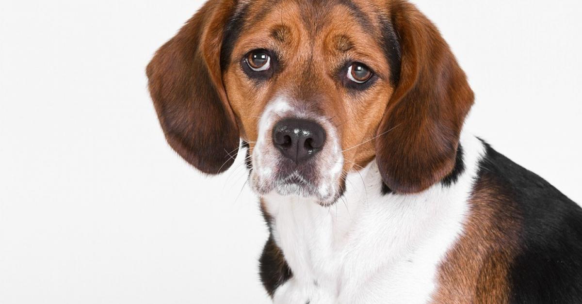 6 raisons qui expliquent la mauvaise odeur de votre chien. Black Bedroom Furniture Sets. Home Design Ideas