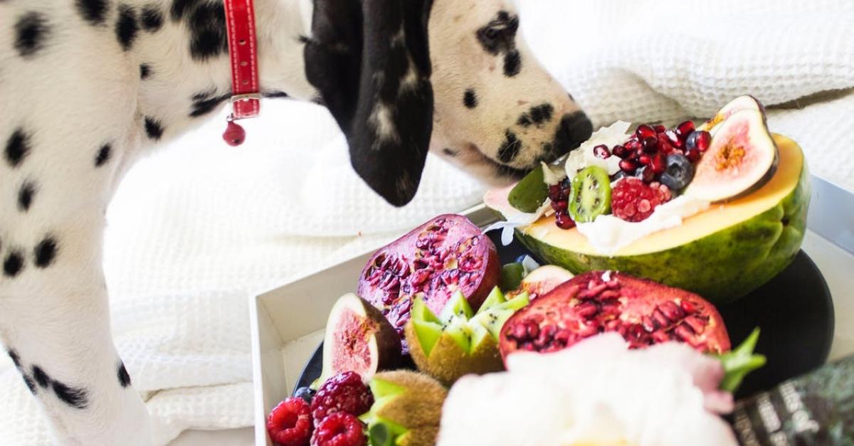 6 aliments humains bons pour la sant de votre chien. Black Bedroom Furniture Sets. Home Design Ideas