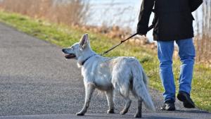 Illustration : 10 choses que vous devriez savoir avant d'adopter un chien