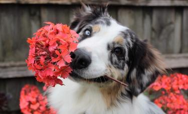 """Illustration : """"7 conseils pour protéger plantes et jardins de votre chien cet été """""""