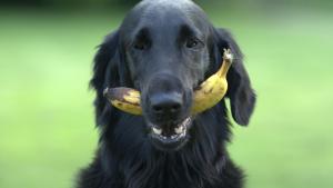 Illustration : 14 fruits et légumes que votre chien adorera