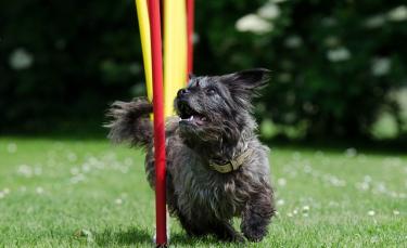 """Illustration : """"5 astuces pour que votre chien soit heureux dans le jardin"""""""