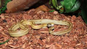 Illustration : Comment aménager un terrarium pour serpent ?