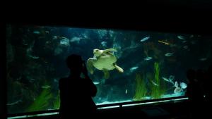 Illustration : Quel aquarium choisir pour sa tortue aquatique ?
