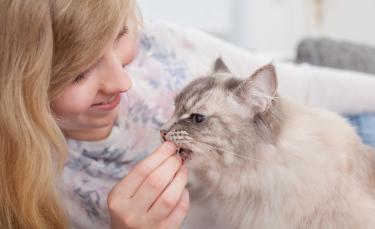 """Illustration : """"Quelles friandises choisir pour son chat ?"""""""
