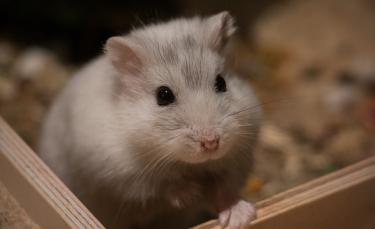 """Illustration : """"Soins et hygiène à apporter à son hamster"""""""