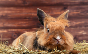"""Illustration : """"Préparer l'arrivée du lapin à la maison"""""""