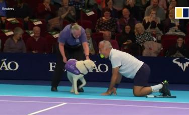 """Illustration : """"(Vidéo) Des chiens ramasseurs de balles font leur apparition sur le court pour une association"""""""