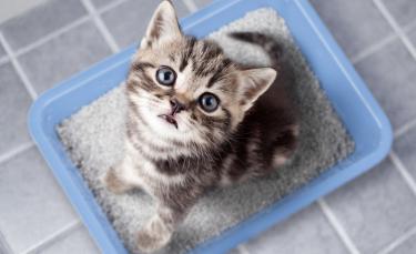 """Illustration : """"Les accessoires indispensables pour accueillir un chaton"""""""