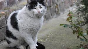 Illustration : Prendre soin d'un chat âgé
