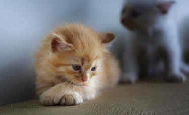 """Illustration : """"La dépression chez le chat"""""""