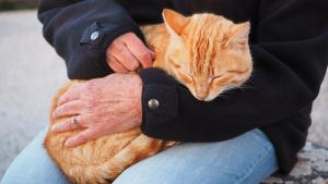 Illustration : Les indispensables pour la trousse de secours du chat
