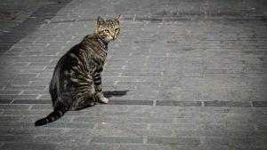 Illustration : Le collier GPS pour chat