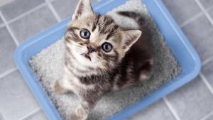 Illustration : Pourquoi mon chat n'est pas propre ?