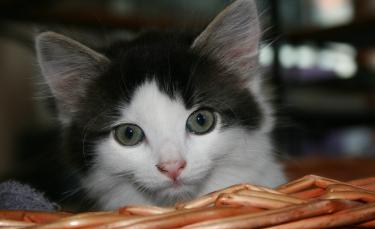 """Illustration : """"Choisir un panier pour son chat"""""""