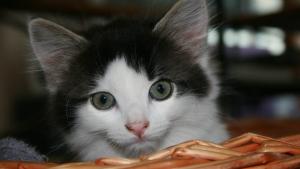 Illustration : Choisir un panier pour son chat