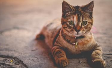"""Illustration : """"Les vaccins nécessaires pour voyager avec son chat"""""""