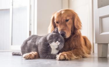 """Illustration : """"Faire cohabiter mon chien avec un chat"""""""