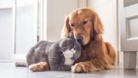 Illustration : Faire cohabiter mon chien avec un chat