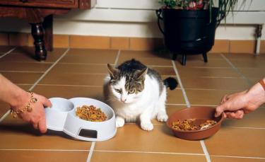 """Illustration : """"Comment varier et proposer une alimentation équilibrée pour son chat ?"""""""