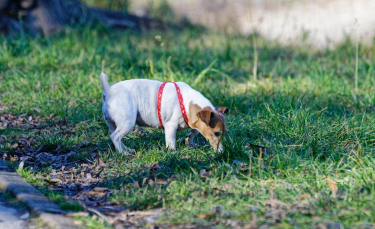 """Illustration : """"Mon chien gratte le sol : pourquoi ?"""""""