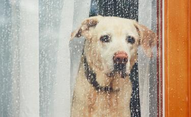 """Illustration : """"Apprendre à son chien à rester seul"""""""