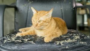 Illustration : Les précautions à prendre en cas de griffures de chat