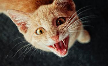 """Illustration : """"Mon chat me réveille la nuit, que faire ?"""""""
