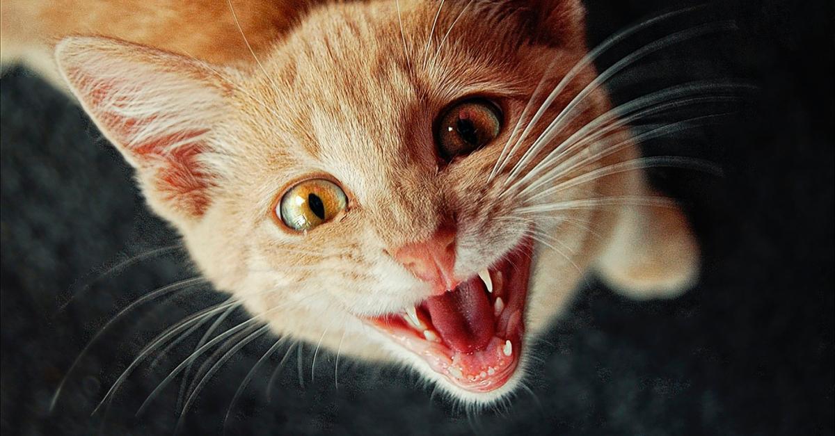 Mon chat me réveille la nuit : comment le stopper ?
