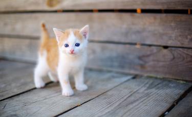 """Illustration : """"Reprendre un chaton après la mort de son chat"""""""