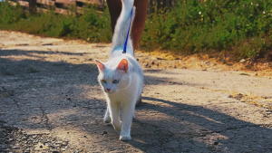 Illustration : Promener son chat