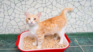 Illustration : Mon chat refuse d'utiliser sa litière, pourquoi ?