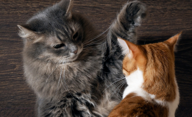 """Illustration : """"La peur des autres chats"""""""