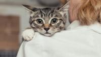 Illustration : La peur des autres chats